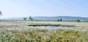Blick über Wollgrasflächen zum Wiehengebirge