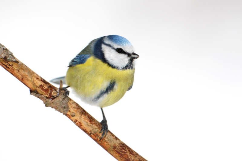 Mitmach-Aktion: Stunde der Wintervögel