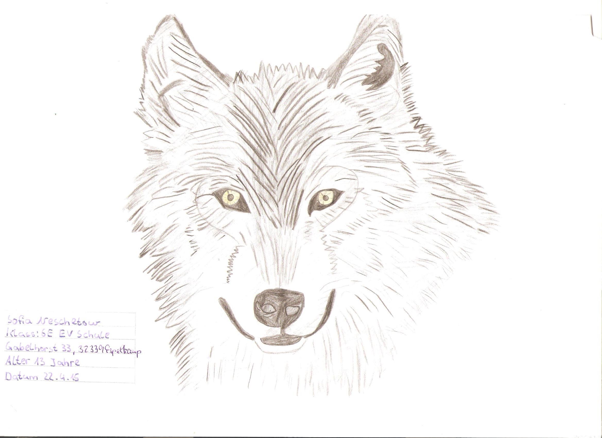 Malwettbewerb Wolfswochen