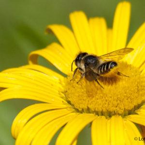 Eine neues Bienenhaus