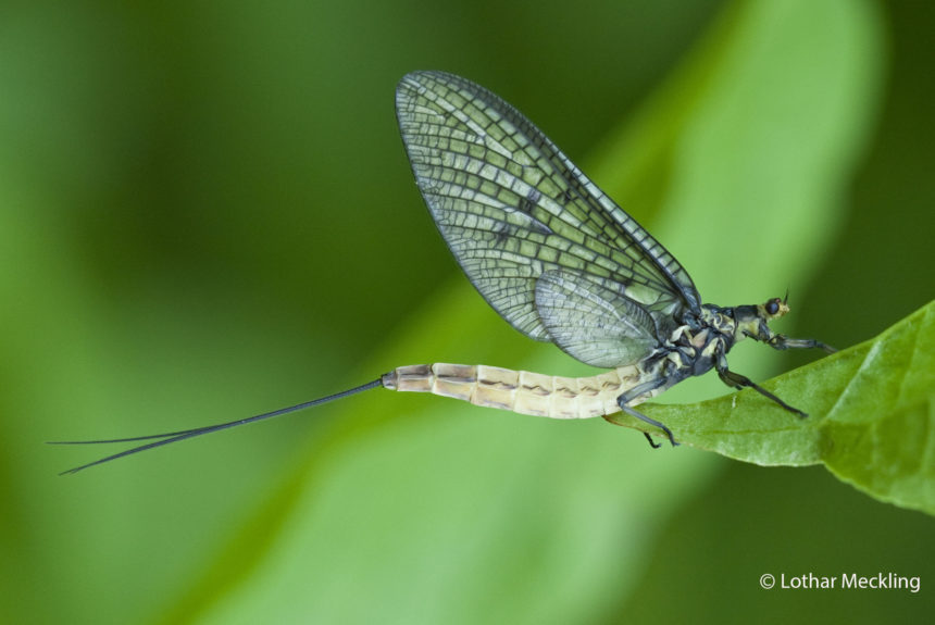 Insektensafari