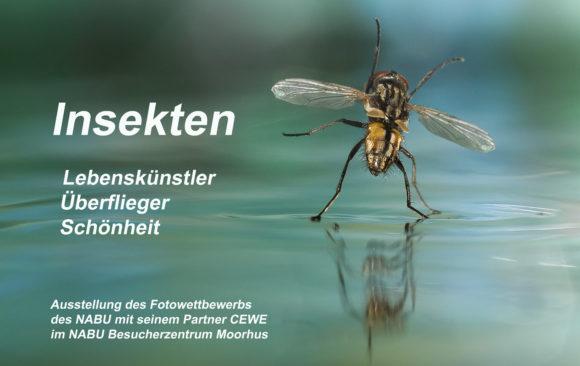 Insekten – Lebenskünstler, Überflieger, Schönheiten!