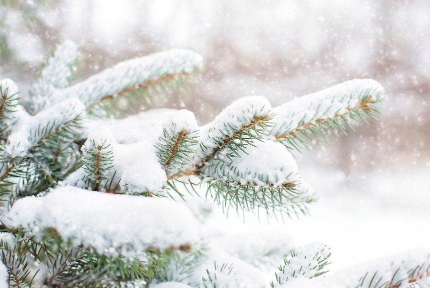 NEWS Winterwanderung 26.01.2020