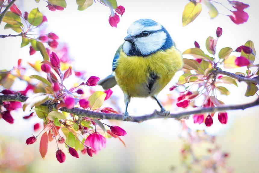 Vogelgesang im Vorfrühling – Vogelgesang für Anfänger