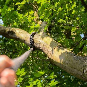 """Verlegung der BNE-Fortbildung  """"Seil und Baum"""" in den September 2021!"""