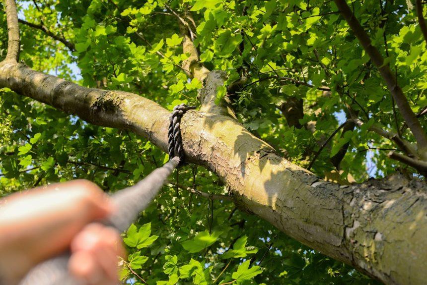 Methoden-Workshop: Seil und Baum – bewegende Naturerlebnisse mit mobilen Seilaufbauten